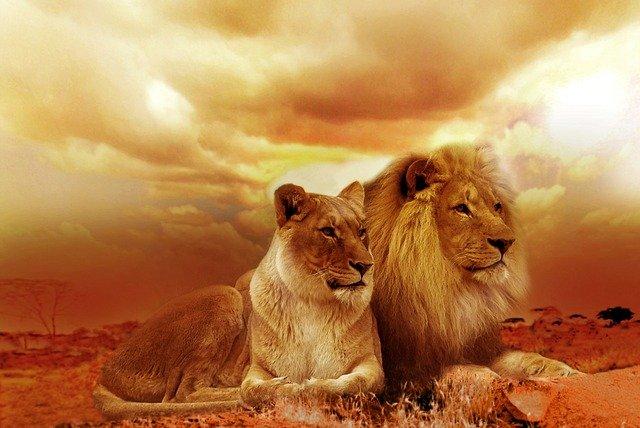 Safari Serengeti : « les plaines sans fin » de la Tanzanie
